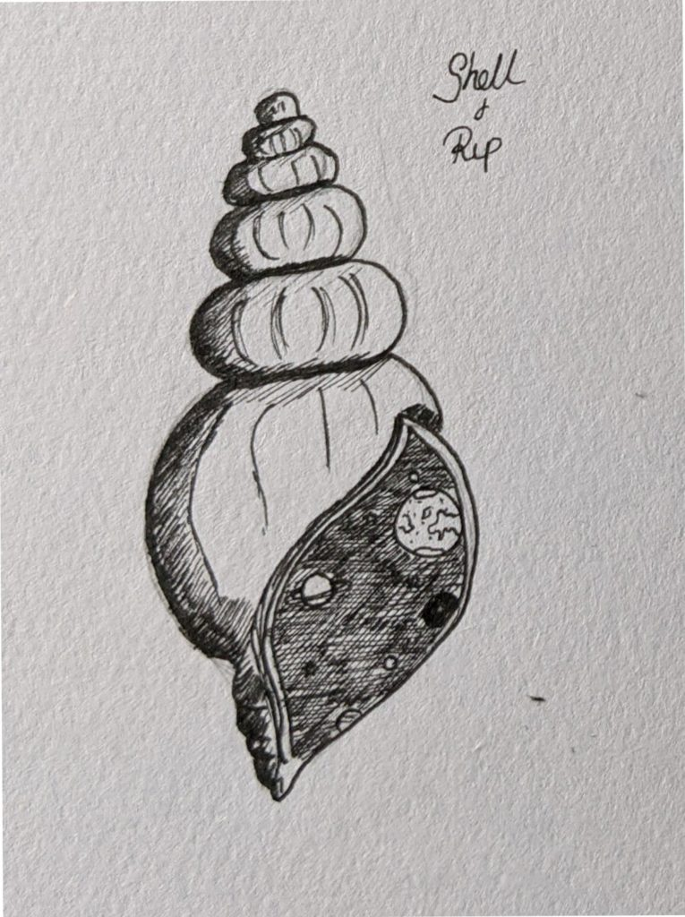 shellrip 765x1024 - Inktober